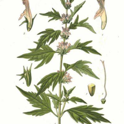 Elixir unitaire – Agripaume