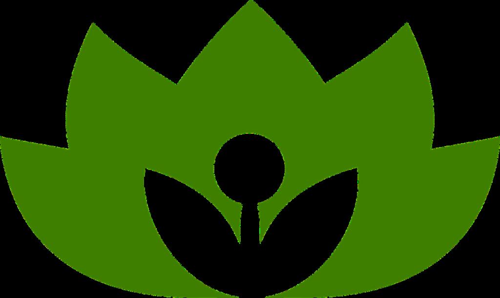 Préparations à base de plantes bio ou sauvages